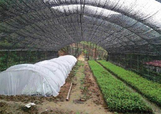 """基金项目:""""增城蜜菊""""组培苗有机栽培管理技术"""