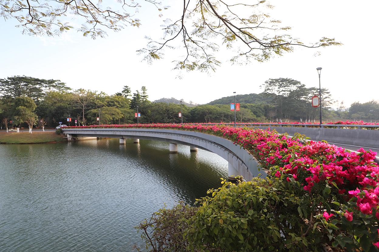 东莞迎宾馆主要园路重要地块绿化景观提升工程
