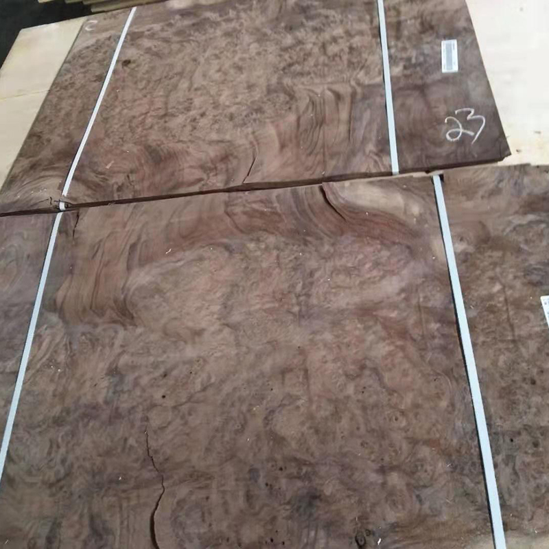 Large piece of black walnut veneer burl